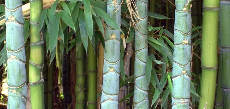 Bambus Pflegen Im Jahreslauf Bambusborse
