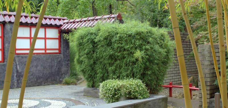 Bambus Fargesia Kaufen Top Auswahl Bambusborse