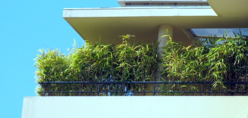 Bambus Im Kubel Kultivieren Bambusborse