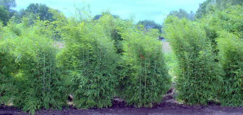 Well Born Bamboo Africa Kaufen Bambusborse