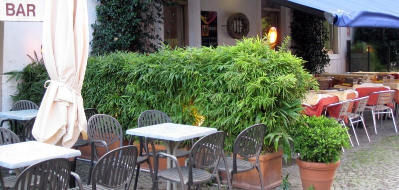 Bambus Im Kübel Kultivieren Bambusbörse
