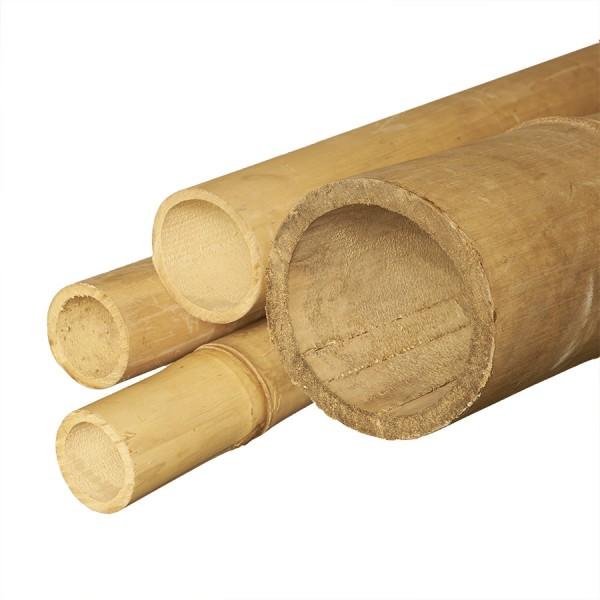Bambusrohre 'Apus'