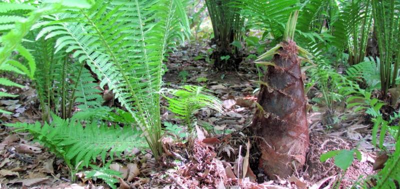 Wachstum Von Bambus Bambusborse