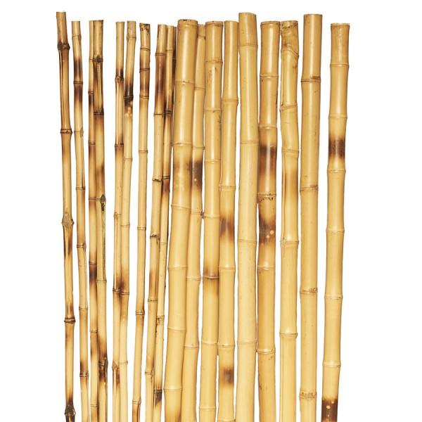 Bambusrohre 'Cedani' *