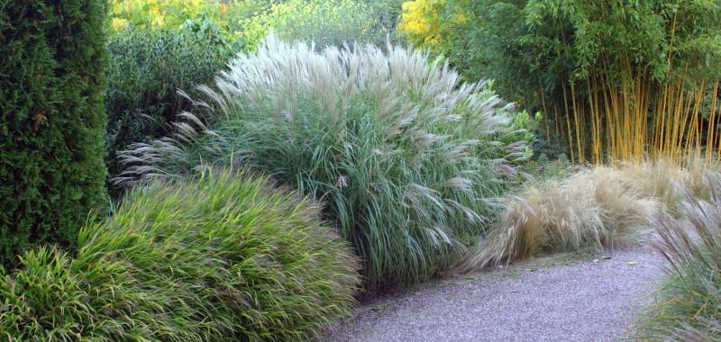 Bambus & Gräser kaufen und perfekt kombinieren | Bambusbörse