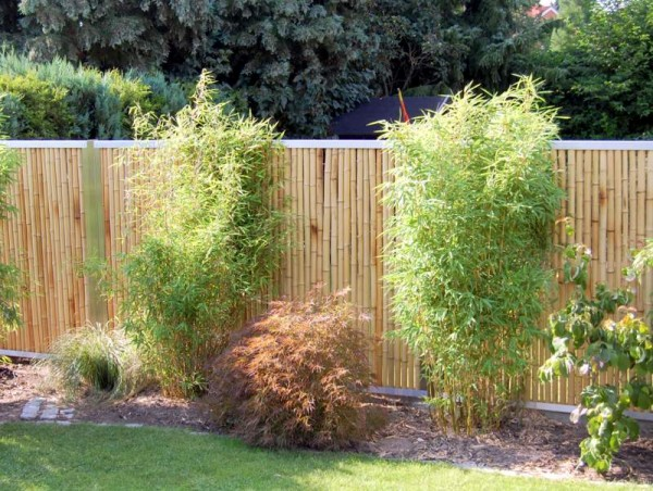 Bambuszaun: Zaunfeld mit oberem & unterem Abschlussprofil*