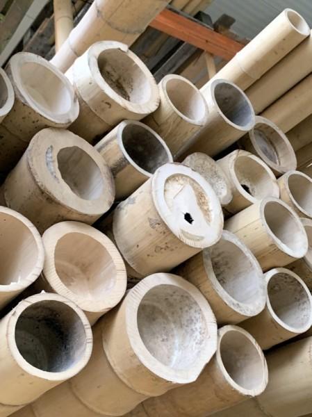 Bambusrohre 'Moso' *