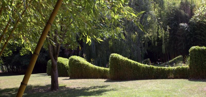 Bambus Richtig Schneiden Bambusborse