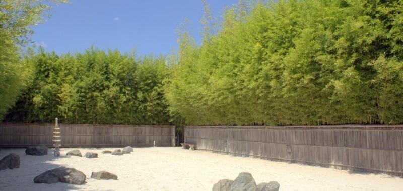 Gartengestaltung mit Bambus | Bambusbörse